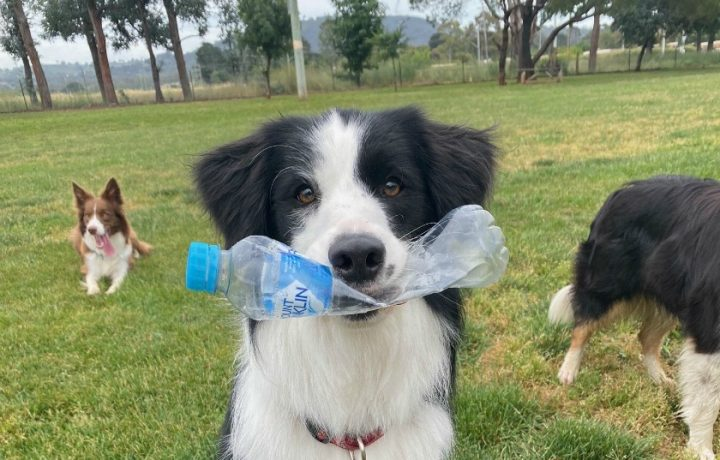 Responsible dog owners become responsible recyclers