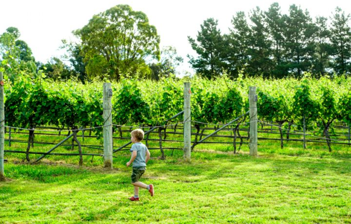 Get to know Canberra's wine country ahead of Canberra District Wine Week
