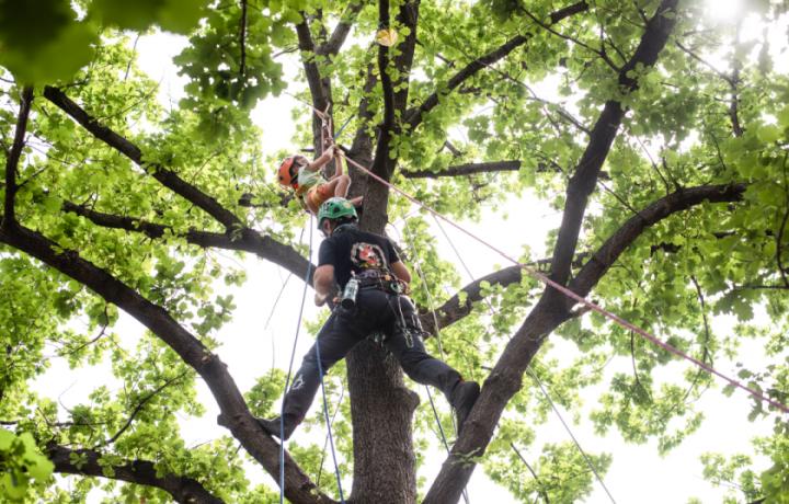 Climb, Create and Celebrate: Canberra Tree Week 2021 at Haig Park