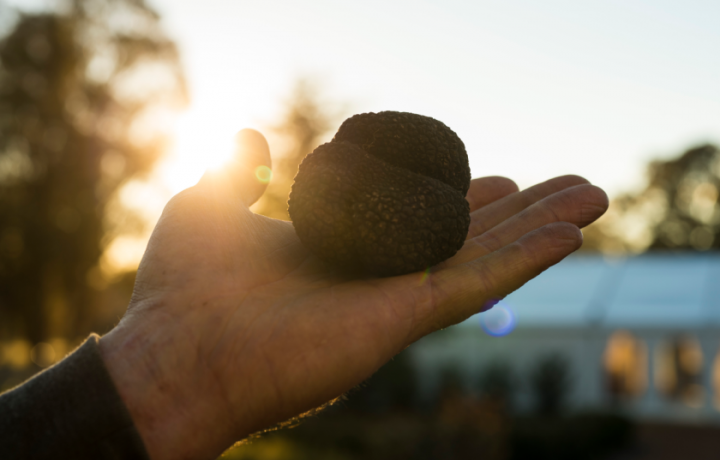 What not to miss at The Canberra Region Truffle Festival 2021