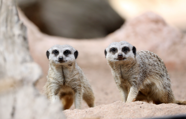 Did someone say a whole year of adorable animal encounters at Mogo Wildlife Park?