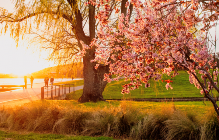 16+ Instagrams to follow for Canberra spring-spiration