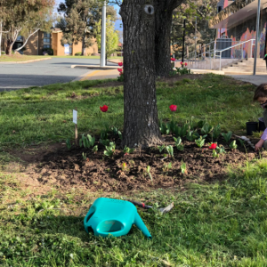 Community is blooming in Scullin